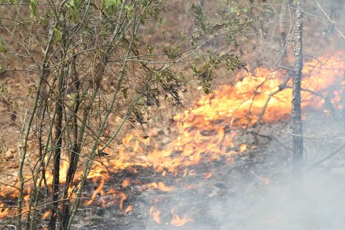 SCNG_and_SC_Forestry_Commission_team_up_to_fight_fires_150410-Z-WS267-111